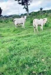 Fazenda 690ha 4okm de Caceres