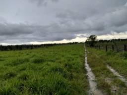 Fazenda no Pará, 46 alqueires pronta por R$ 1.250.000,00 há 120 km de Belém