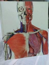 O Livro do Corpo Humano - Steve Parker