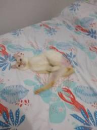 Adoção de gato especial
