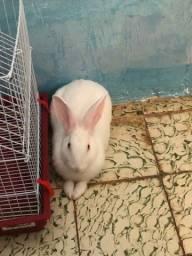 Coelhinho branco de olhos vermelhos