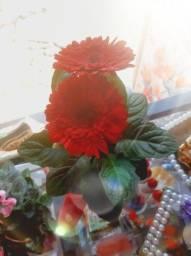 Lindos vasos decorativos com flores naturais