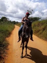 Vende-se esse cavalo