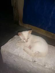 Doação de gatinhos responsável