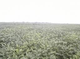 Fazenda em BALSAS - MA, p/ Soja