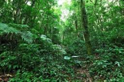 Terra com 1000 hectares com toda madeira