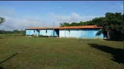 Fazenda 200 hectares em Concórdia do Pará - 110 km de Belém - menor preço da região!