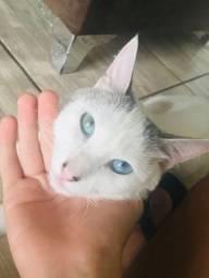 Gato macho branco 9 meses