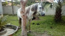Cavalo de carrinho