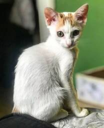Gatinha fêmea para adoção
