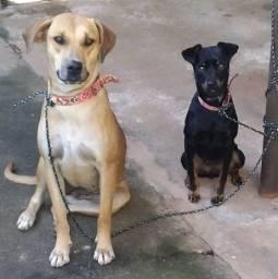 Doação de 2 cachorras
