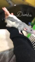 Twister Dumbo