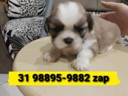 Título do anúncio: Canil Filhotes Diferenciados Lhasa Beagle Poodle Maltês Shihtzu Yorkshire