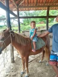 Vendo ponei