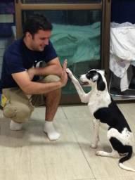 Adestramento Canino! adestramos seu cão