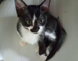 A gatinha Danadinha procura um lar!