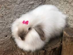 Casal coelhos fuzzy lop