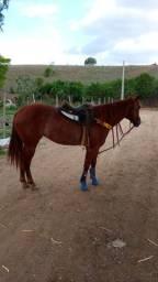 Égua com 3 anos
