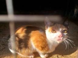 Doação filhotes gatas fêmeas