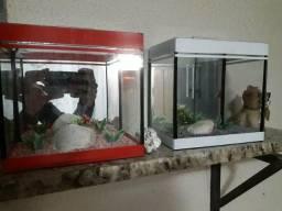 Vendo aquários pra peixe beta