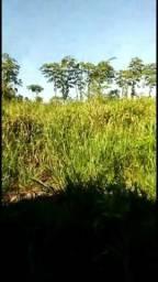 Vendo uma terra de 150 alqueires a 80 km de anapu