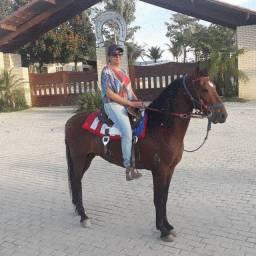 Cavalo castanho registrado