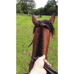 Cavalo criolo documentado