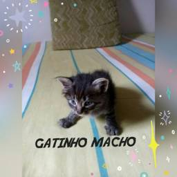 3 Gatinhos para doação