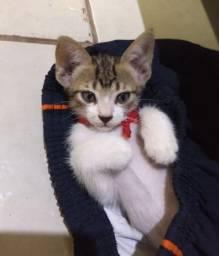 Doação responsavel gatinha linda