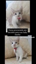 Doação desse gatinho