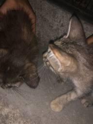 Dois filhotes de gato para adoção