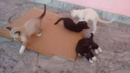 Doando esses 4 gatinhos
