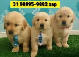 Título do anúncio: Canil Filhotes Alto Padrão Cães BH Golden Labrador Akita Rottweiler Pastor Boxer