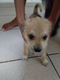 Cachorrinha para doação,moro no Valentina,a raça dela é shitzu com vira lata,