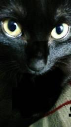 Doação lindo gato preto castrado 10 meses