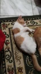 Gatos para doação todos vermífuga dos.