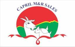Vendo filhote de cabras de diversas raça e preços
