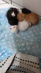 Filhote de gatos para doação