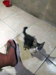 Estou doando um gatinho!