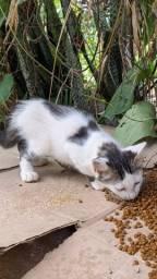Doação de gatinho macho