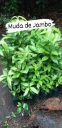 Muda de plantas
