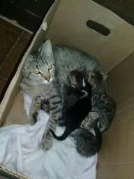 Doacao Gata com 5 filhotes