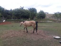 cavalo  de 1 ano e 10 meses