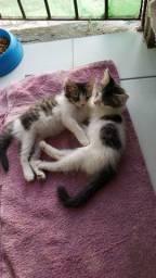 Gatos para adoção!