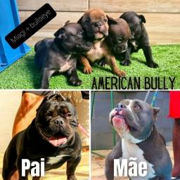 Filhotes de American Bully