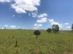 Fazenda com 1.190 alqueires, montada pra pecuária (Nogueira Imóveis Rurais)