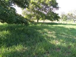 Chácara própria para Haras! 7 hectares a apenas14 km de CG