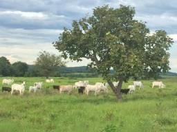 Fazenda 1455 hectares 12 mil por hectares