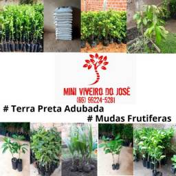 Mudas frutiferas enxertadas