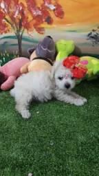 Poodle Toyzinha